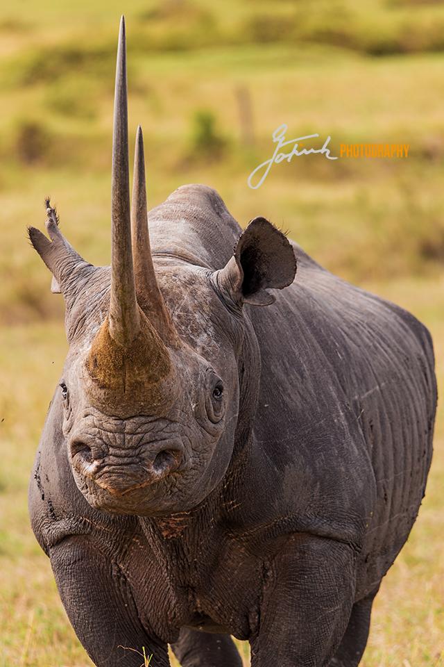 Magic-Rhino-Masai-Mara-Kenia-6548