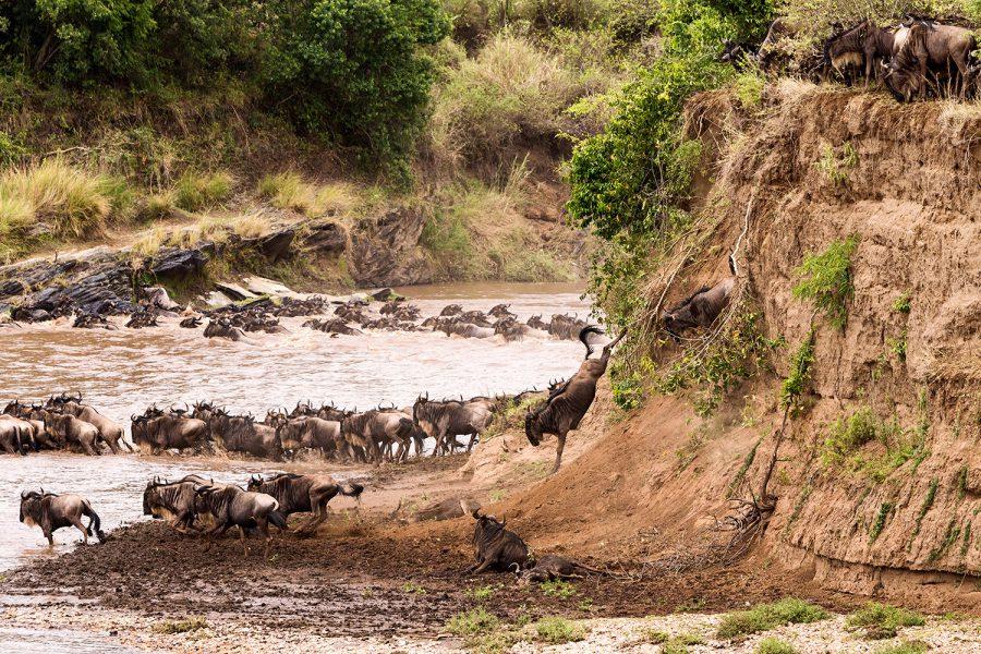 Gnus Jump Mara River 3508 V5.21