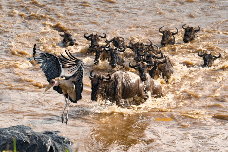 Maribu mit Gnus,Mara River 5387 V 5.21WL