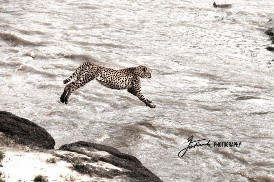 Masai Mara IMGL6263 L 1500w