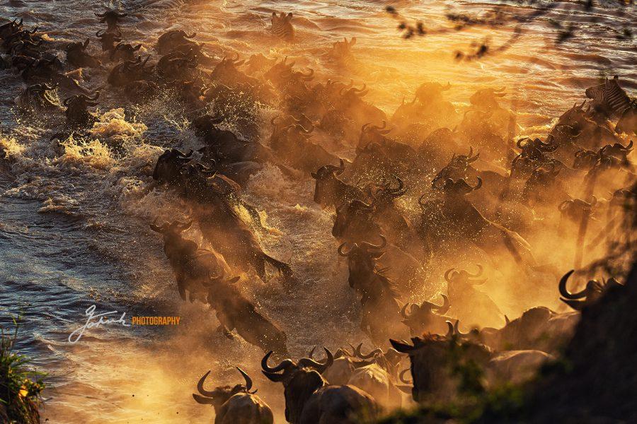 Masai Mara IMGL7416 v3LW