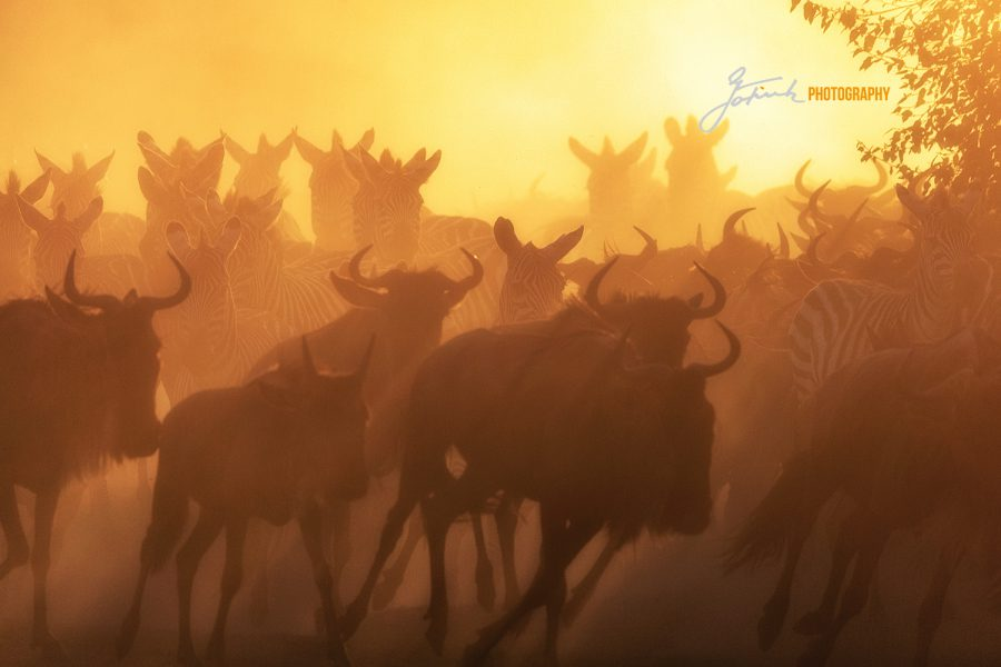 Masai Mara IMGL7549 V 5.21aWL