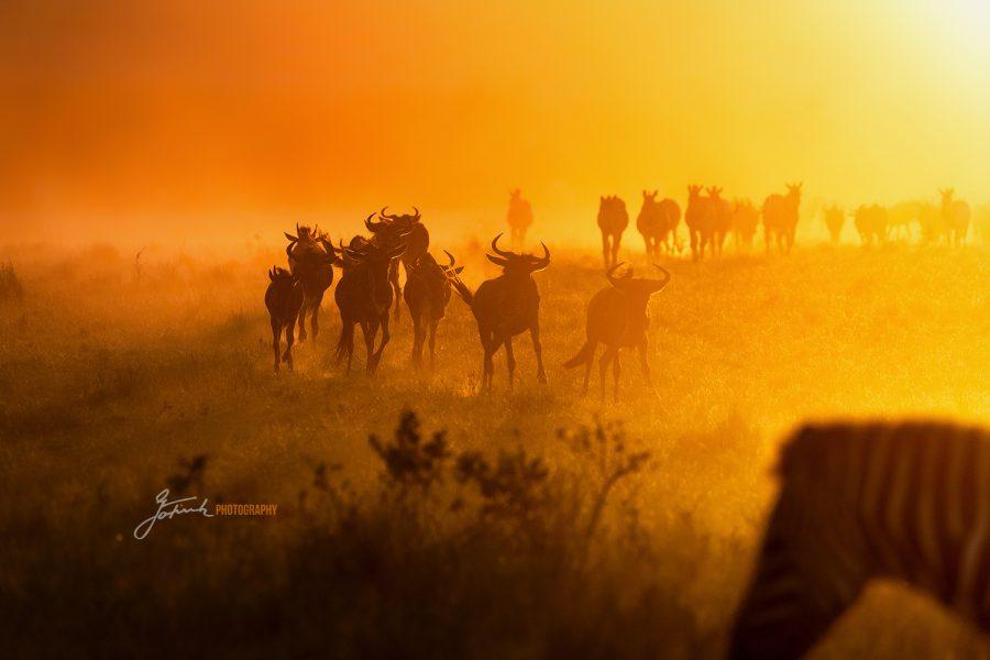 Masai Mara IMGL7660v1 WL