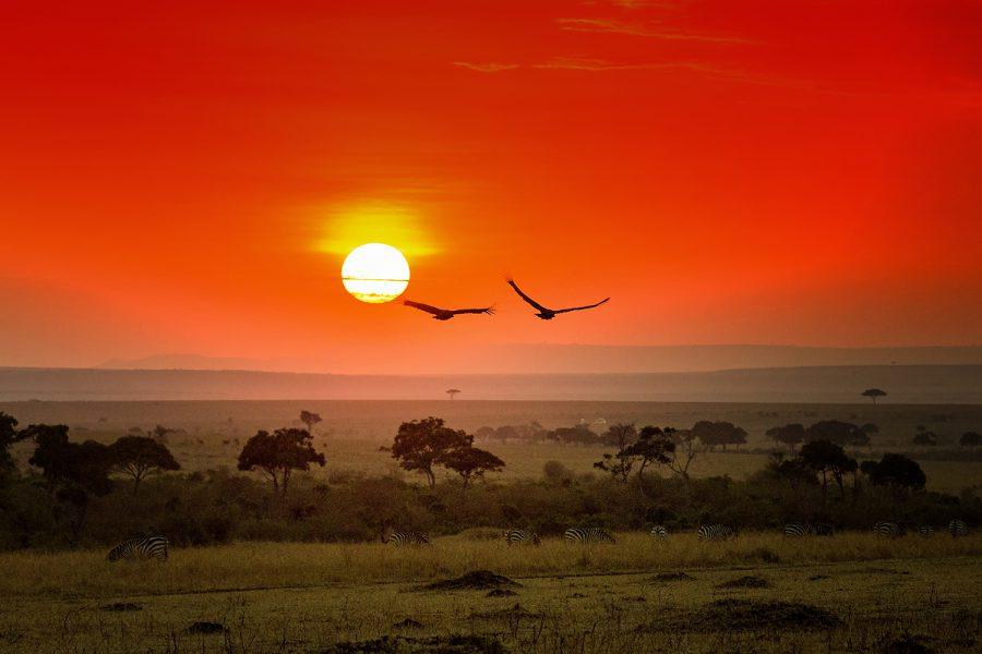Sundown near Malaika Camp, Masai Mara 3790
